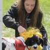 Jim Vaiknoras/staff photo.Freckles doesn't quite know what to think as Jill Dewey of Groveland dresses her in a cheerleader costume at Groveland Days Saturday at the Groveland Recreation Fields. Freckles is a rescue from Sweet Paws Rescue of Essex.