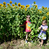Newburyport; William, 6, and Bella , 4, Martellucci of Newburyport check out the sunflowers at the Colby Farm along Scotland Road Sunday afternoon. Jim Vaiknoras/staff photo
