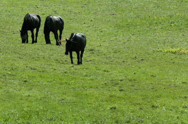 Salisbury: These equines graze under a sunny sky off Congress Street in Salisbury on Wednesday afternoon. Bryan Eaton/Staff Photo