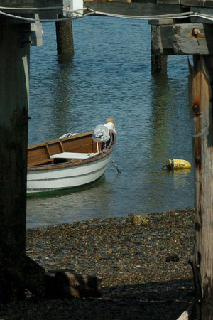 Seabrook: A seagull peers down from its perch on a skiff looking for lunch on Tuesday afternoon at Eastman's docks at Seabrook Harbor. Bryan Eaton/Staff Photo