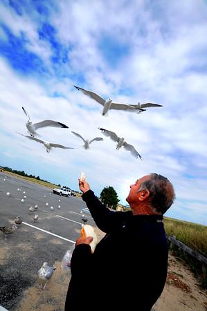 JIM VAIKNORAS/staff photo Reggie Thibault feeds seagulls at Salisbury Beach Reservation Saturday afternoon.