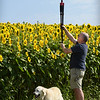 BRYAN EATON/Staff photo. Whitney Shaw of Marlborough, with Lucky, was heading to Maine and made the detour to photograph Colby Farm's sunflowers at Hillman Field in Newbury.