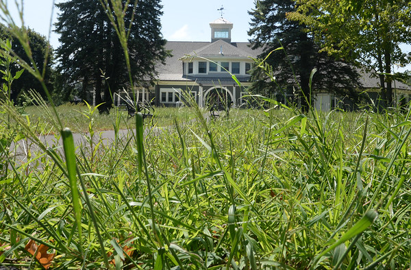 BRYAN EATON/Staff photo. The Salisbury Public Library is seen through overgrown grass at the newly renovated town common. Some on social media are wondering why the grass is so tall.