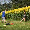 BRYAN EATON/Staff photo. There are almost as many cameras as there are sunflowers as people constantly take photos of each other at the sunflowers at Colby Farm in Newbury.