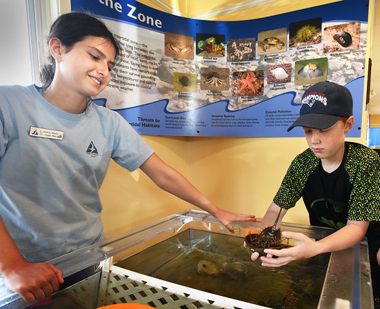 BRYAN EATON/Staff photo. Summer intern Alexis Quirk, left, talks to Andrew Stangle, 12, about the life of a horseshoe crab at a touch tank at the Joppa Flats Education Center in Newburyport. The youngster was visiting the area with his family from Winthrop, they had lived in Amesbury before.