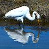 JIM VAIKNORAS/Staff photo An egret hunts in the salt march along Rt 286 in Seabrook Saturday afternoon.