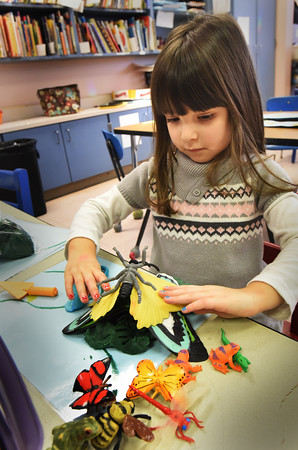 BRYAN EATON/Staff photo. Chloe Icobacci, 3, takes models of butterflies to stick on Play-Doh to make a little menagerie. She was in free time in Anne Remley's pre-kindergarten class at the Pine Grove School in Rowley.