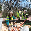 JIM VAIKNORAS/Staff photo Arborist Jean Berger, left and Mary Jo Ficocello along with Tree Commissioner Connie Preston, Center trim and mulch trees along High Street in Newburyport Saturday.