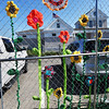 BRYAN EATON/Staff photo. Yarn bombs in the form of flowers created on the fence near the Newburyport Harbormaster's Headquarters.