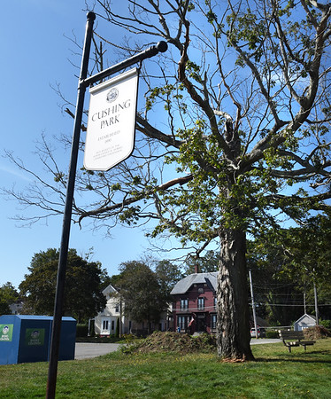 BRYAN EATON/Staff photo. This tree at Cushing Park in Newburyport is slated by to removed by the city. A screech owl lives in the tree and officials are wondering what options they have to remove it.