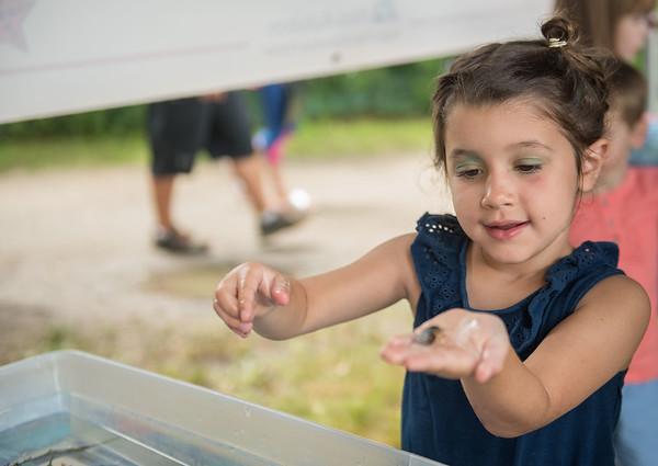 AMANDA SABGA/Staff photo<br /> <br /> Lola Eigen, 5, of Newburyport explores hermit crabs at the Massachusetts Audubon Society's portable touch tank during Yankee Homecoming's Family Day at Maudslay State Park in Newburyport.<br /> <br /> 8/3/19