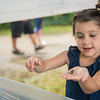 AMANDA SABGA/Staff photo<br /> <br /> Lola Eigen, 5, of Newburyport explores hermit crabs at the Massachusetts Audubon Society's portable touch tank during Yankee Homecoming's Family Day at Maudslay State Park in Newburyport.<br /> <br /> 8/3/19