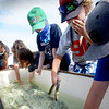 BRYAN EATON/Staff Photo. Youngsters at the Merrohawke Boat Camp on the F/V Erica Lee try catching American eels in a tub before heading out on the ocean for the day. The program is at half capacity because of the coronvirus.