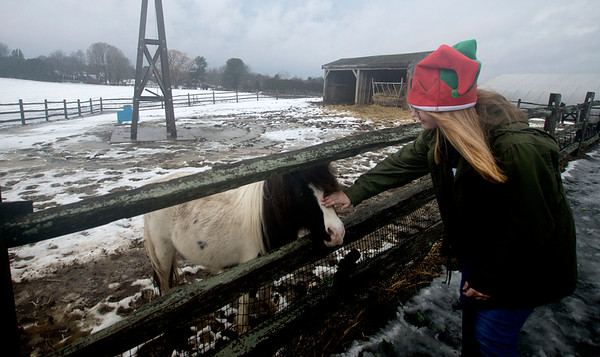 JIM VAIKNORAS/Staff photo Employee Lydia Crowley gets in the holiday spirit as she pets Chiquita, a mini horse, in the morning fog Sunday at the Tendercrop Farm in Newbury.