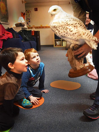 "BRYAN EATON/Staff photo. Youngsters are amazed by a stuffed snowy owl, which succombed to injuries and is used for educational purposes, at the Newburyport Montessori School on Tuesday morning. Presenters from Audubon's Joppa Flats Education Center brought the program ""Eagles and Owls"" to the school teaching the students about the birds of prey."