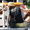 JIM VAIKNORAS/Staff photo Bonnie Alexander, of Methuen, gives her dog Bailey a hug as she gives her other dog Dudley some water on Inn Street in Newburyport Friday afternoon.