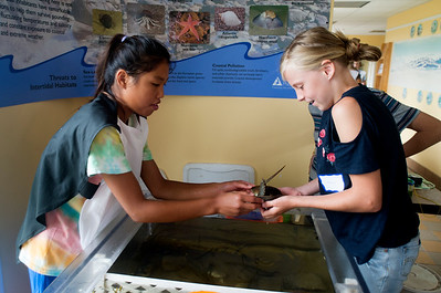 JIM VAIKNORAS/Staff photo Volunteer Liana Joy show a horseshoe crab named Dylan, to visitor Mary Eastman, 11, of Merrimac, at the Joppa Flats Education Center in Newbury Sunday.