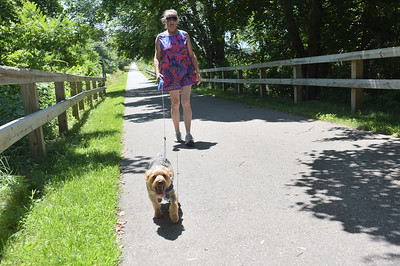 TIM JEAN/Staff photo  Laurie Frohlich, of Salisbury walks her dog Stinky, along the Old Eastern Marsh Rail Trail in Salisbury. Work on connecting the Clipper City Trail in Newburport and the Ghost trail in Salisbury will soon begin. 7/9/18