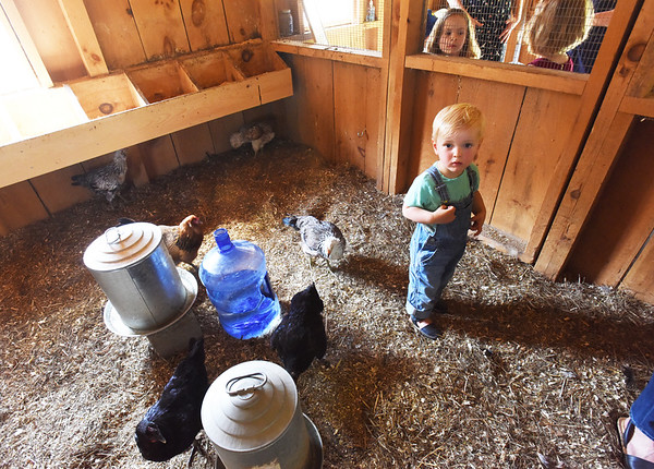 BRYAN EATON/Staff photo. Finn Matas, 1, stands near water feeders and hens as his brother, Marcel, 4, collects eggs.
