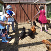 BRYAN EATON/Staff photo. Youngsters spread cracked corn and seed for the chickens to peck at.