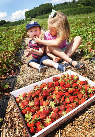 BRYAN EATON/Staff photo. Doting sister Vivienne McDonnell, 5, feeds Hugh, 1, a strawberry, though he has his own, on an outing at Cider Hill Farm in Amesbury on Tuesday afternoon with their parents Ryan and Caroline of Beverly. Though there are places in their area for pick-your-own, they like coming to Amesbury as Ryan grew up nearby in Groveland.