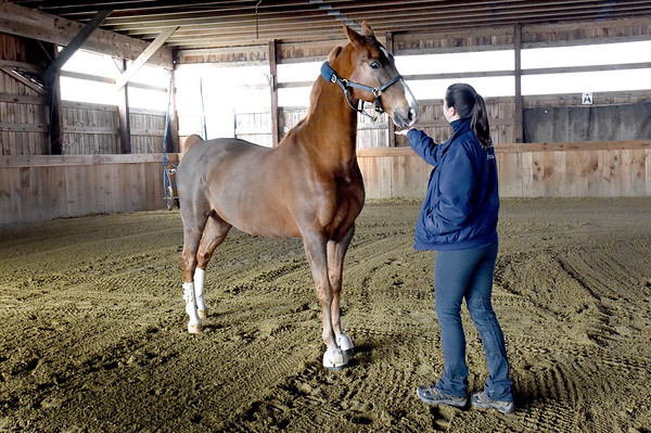 BRYAN EATON/Staff photo. Darla Wright spends time with Hollywood in the barn as he gets time to run around.