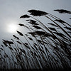 JIM VAIKNORAS/Staff photo Sea grass, bent by the wind, is silhouetted against cold grey sky Monday morning along the Plum Island Turnpike in Newbury.