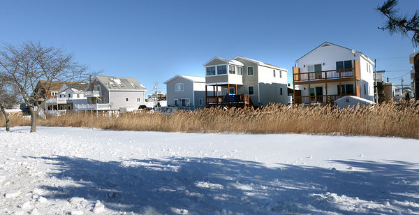 BRYAN EATON/Staff photo. Phragmites grows on the back side of Cable Avenue homes in Salisbury as seen from the Salisbury Beach State Reservation.
