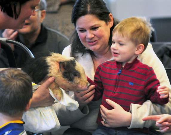 JIM VAIKNORAS/Staff photo James Ryan, 2,, and his mom Kathleen meet Charlie the piglet at the Senior Center in Amesbury. About 40 people showed up to meet and pet the animals brought by Animal Craze Traveling Farm Friday. Along with piglets , they had baby goats , ducks, rabbits and chickens.