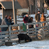 JIM VAIKNORAS/Staff photo People meet the animals at the Old Newbury Christmas tree Bonfire at the Tendercrop Farm fields and Spencer Perce-Little Farm in Newbury Saturday night.