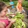 BRYAN EATON/Staff photo. Maisie Jewett, 6, left, and Ethan LaPointe, 7, put damaged lettuce into soil that contains earthworms as they learned about composting.