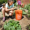 BRYAN EATON/Staff photo. Desiray Martinez, 9, of Amesbury, left, does some weeding while Alexandra Yavarow, 9, of Newburyport does some watering at a garden started at the Boys and Girls Club in Salisbury. Counselor Coreen Pecoraro initiated the garden with some of the produce being used at the club and some going to the youngsters who tend the plot.
