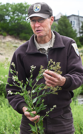 BRYAN EATON/Staff photo. David Tibbetts of the Parker River National Wildlife Refuge shows the students what pepperweed looks like.