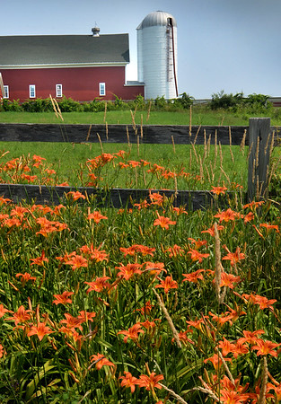 BRYAN EATON/Staff Photo. Day lilles and lush grass add to the colorful scene of Inverness Horse Farm's barn and silo on South Hampton Road in Amesbury. The farm which boards horses and gives lessons is near Battis Farm where the Amesbury Community Gardens are located.