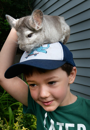 BRYAN EATON/Staff Photo. Henry Panall, 5, is wearing two hats, one a baseball hat with a chinchilla on top at the Emma Andrews Library in Newburyport on Thursday morning. Corey Kummel of Curious Creatures brought different animals for the children to see and touch and then they followed up with crafts for their events on Thursdays.