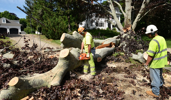 BRYAN EATON/Staff photo. A crew from Asplundh, hired by a utility company, clear a limb that fell from the giant beech tree at 51 High Street in Newburyport onto an adjacent driveway taking down lines in Monday night's storm. Crews were out in various spots around the city dealing with some other cleanup on Tuesday morning.