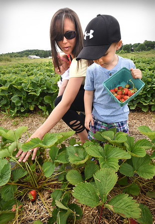 BRYAN EATON/Staff photo. Joshua Gavin, 2, of Newburyport gets a tip from mom, Angela, on how to pull back the leaves to find strawberries and to make sure he picks the darker, riper ones, while on an outing to Cider Hill Farm in Amesbury, also with sister, Emmy, 7 months, in back. Co-owner Karen Cook, who was happening by, said the blueberry crop, which is in a few weeks, and the peach crop is going to be very good this season.