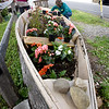 BRYAN EATON/Staff Photo. Lowell's Boat Shop volunteer Linda Villalobos, left, and part-time employee Marie Pierce use an old boat as a planter outside the Amesbury institution. They plant annuals, so have to be replaced every season.