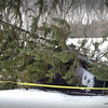 BRYAN EATON/Staff photo. One of the outbuildings at Maudslay State Park in Newburyport was crushed by this huge tree.