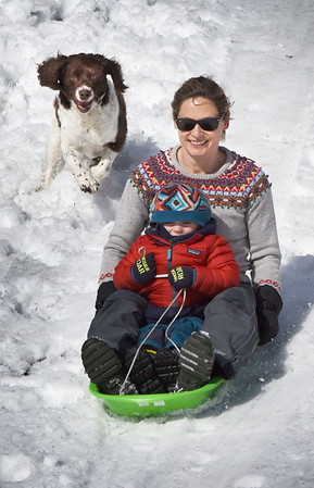 BRYAN EATON/Staff photo. The strong sunlight has softened the snow making it a little easier to shovel and enjoy sledding or cross country skiing. Elizabeth Smith of Newburyport along with son, Quinn, 3, head down a bank at March's Hill in Newburyport with their pooch Pippa chasing after them Thursday afternoon.