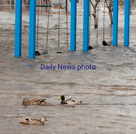 JIM VAIKNORAS/Staff photo Ducks swim on a flooded Cashman Park playground Saturday afternoon.