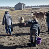 BRYAN EATON/Staff photo. Youngsters lug water through the muck out to the sheeps stall.