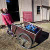 BRYAN EATON/Staff photo. Angela Donahue, 12, of Rowley wheels supplies out to the animals' corral.