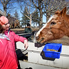 BRYAN EATON/Staff photo. Angela Donahue, 12, of Rowley spends some time with Sukey, a quarterhorse born in 1992.