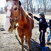BRYAN EATON/Staff photo. Thomas Duratti, 9, of Newburyport grooms Sukey, the resident horse at the farm.