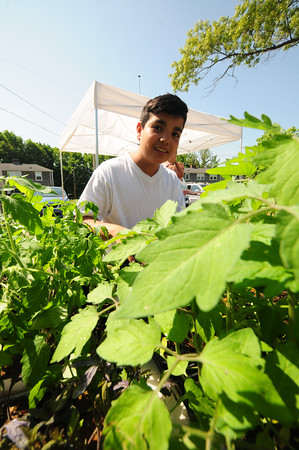JIM VAIKNORAS/Staff photo Omar Mohmood, 12, helps sort plants at Kelleher Park in Newburyport Saturday, Nourishing the North Shore (NNS) helped iinstallKitchen Gardens there this weekend. This is a wonderful new pilot program funded by a grant from New England Grassroots Environmental Fund. There are 15 gardeners who signed up for this initiative and they will be tending to 11 gardens and a Kid's garden too. Everyone is very excited to start growing!