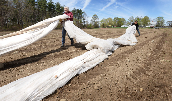 BRYAN EATON/Staff photo. Donna Bartlett, left, co-owner of Bartlett's Farm in Salisbury, and summer worker Deise Kussaba, from Brazil, stretch out row covering over a field seeded with string beans. The covers, which help keep in the heat for faster growing, can be reused at least once more, hopefully twice.