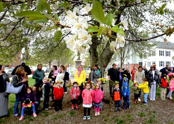 BRYAN EATON/Staff photo. Cherry blossoms frame Newburyport Montessori School May Day festivities at Brown Square.