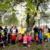BRYAN EATON/Staff photo. Cherry blossoms frame Newburyport Montessori School May Day festivities at Brown Square.