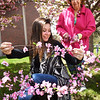 BRYAN EATON/Staff photo. For years Bella Fusco has been helping Carol Bartlett with the decorations for the Amesbury High School prom promenade. This year, the 16-year-old is going to the prom herself.